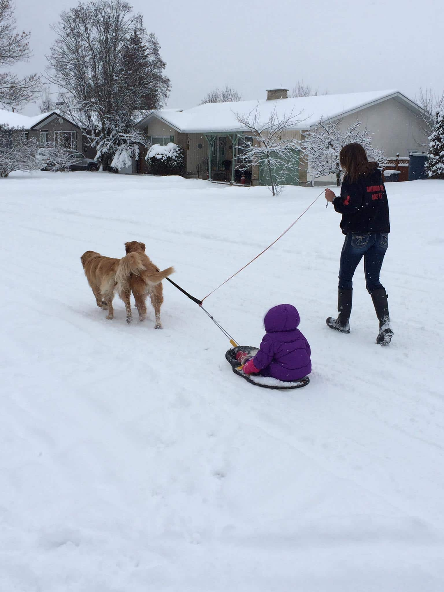A kid on a sled pulled by two dogs.