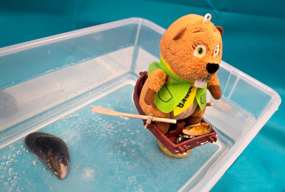 A stuffed toy in small boat rests in a container of water.