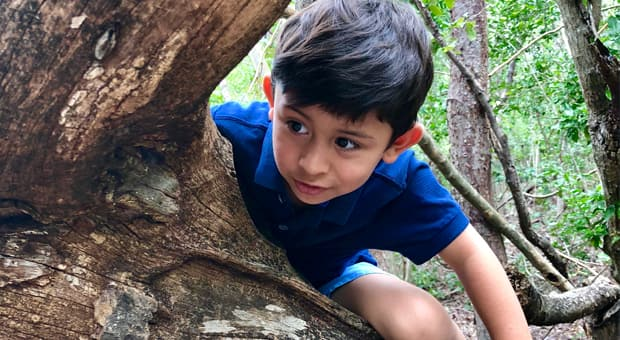 a young boy climbs over a branch in the woods