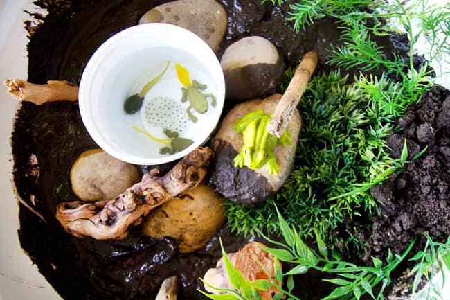 Frog pond sensory play