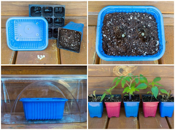 4 steps to sprouting seeds directly in soil.