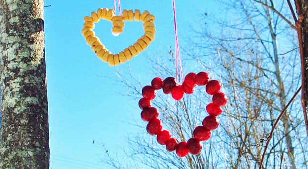 Bird feeders in the shape of hearts.