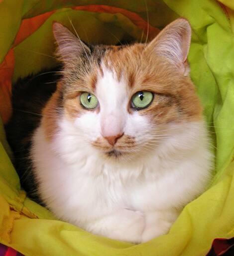 The beloved cat, Noelle.