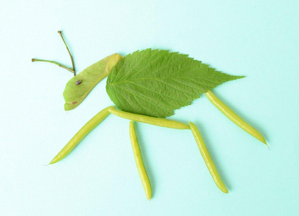 A bug made f weeping peashrub, maple key and a leaf.