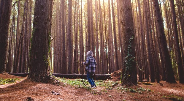 A child playing in a forest alone.