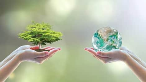 One hand holds a tree. Another hand holds the Earth.