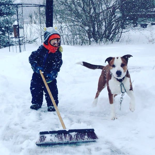 A kid shovels with his dog.