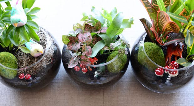 terrarium craft ideas diy terrariums for play cbc parents 3066