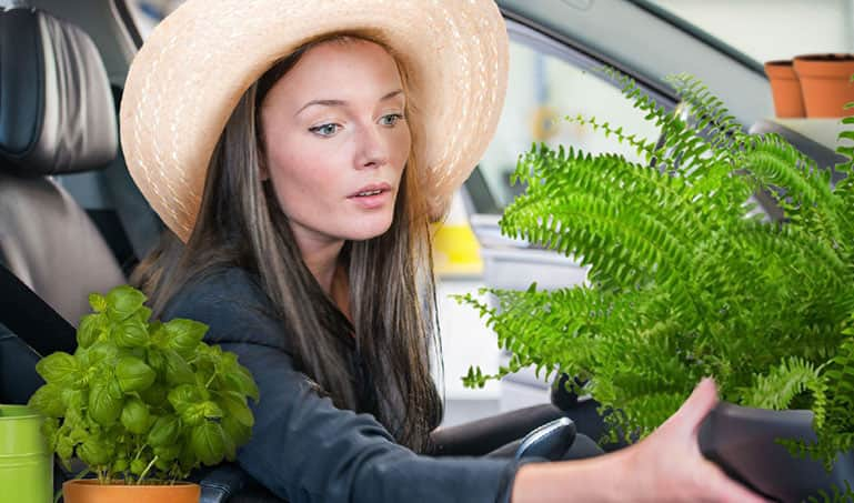 A stock-photo collage of a woman in a sunhat tending to a fern growing out of the glovebox in her car. A pot with basil sits next to her on the arm rest.