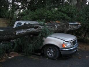 Tree hits truck