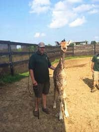 Baby giraffe and Dad Francis Lavigne.jpg