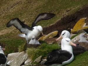 Keating Albatros.JPG