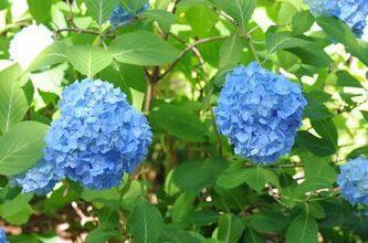 (C) Mun Botanical gardens