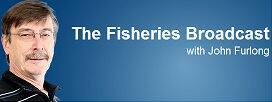 fishfinal5.jpg
