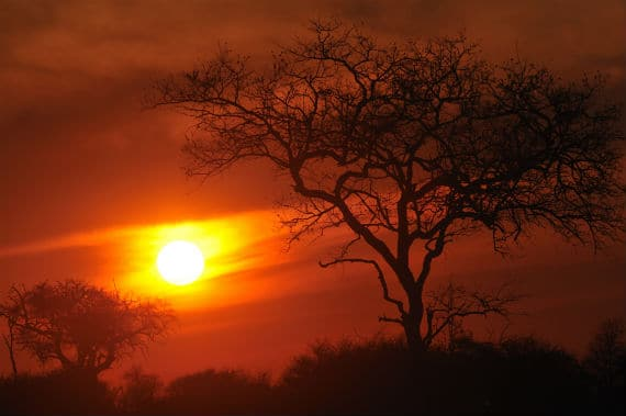 Kruger sunset (Courtesy Anne-Marie Kalus) smaller.jpg