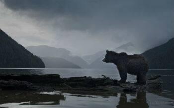 Great Bear Rainforest.jpg