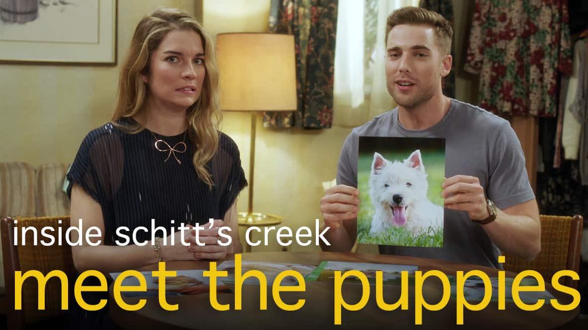 Meet the Puppies