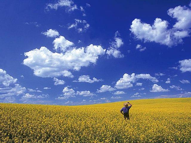 http://www.cbc.ca/sevenwonders/images/pic_wonder_prairie_sky_lg.jpg