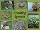 sprouts3.jpg