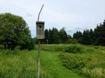 nestingbox.jpg