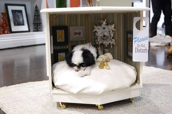 Diy For Your Furry Friends Steven And Chris