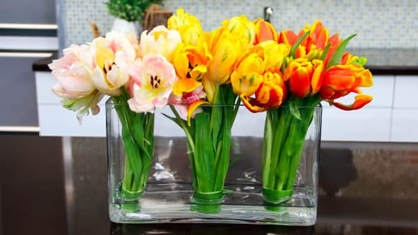 Colour Blocked Tulips