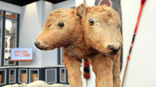Two-Headed Animals