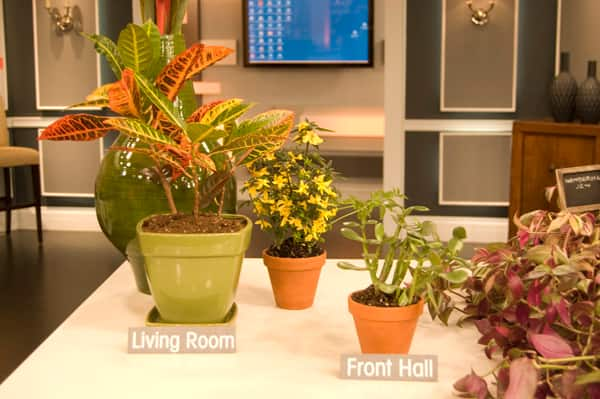 Feng Shui: House Plants