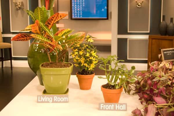 Feng shui house plants feng shui living room front door for Plants for front door feng shui