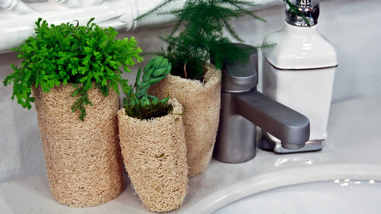 Three small plants on a sink