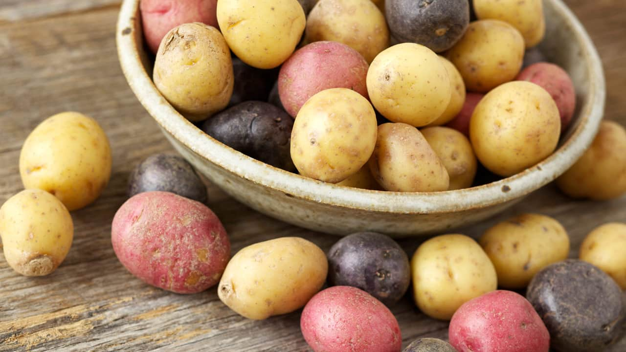 Bowl filled with yellow, red, and purple small potatoes.