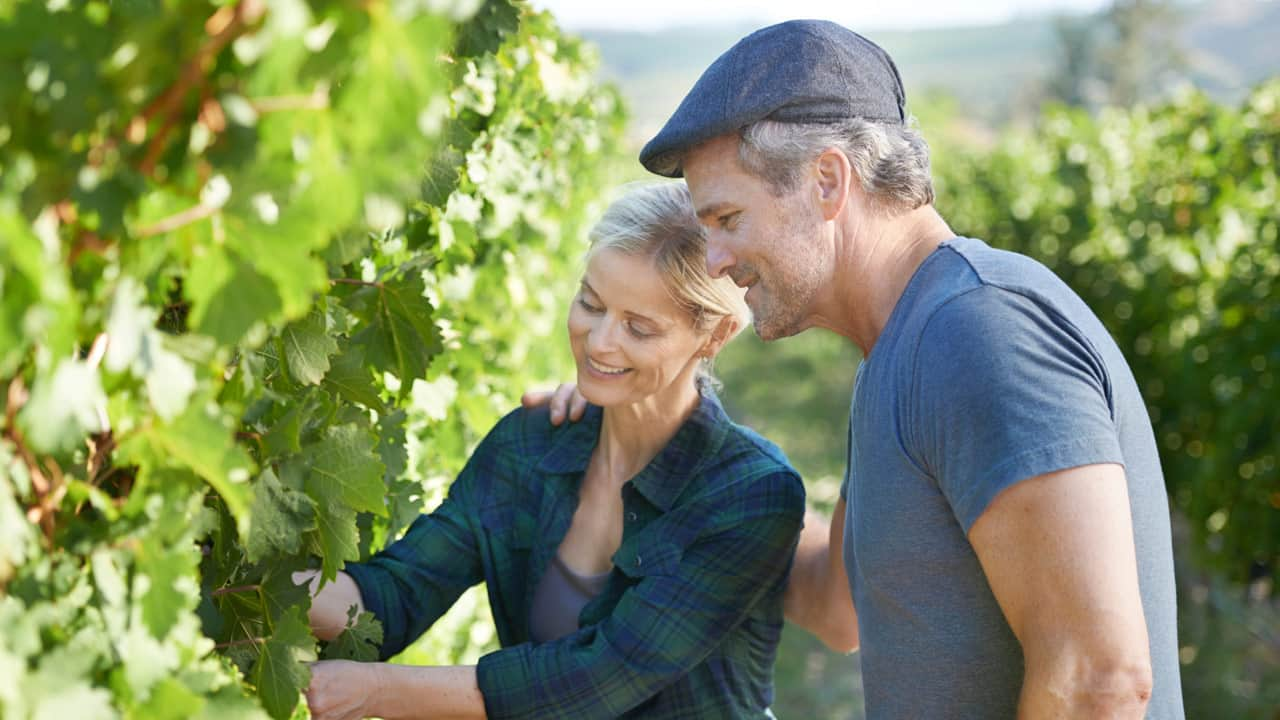 A man and woman are on a date in a vineyard. They are picking branches.