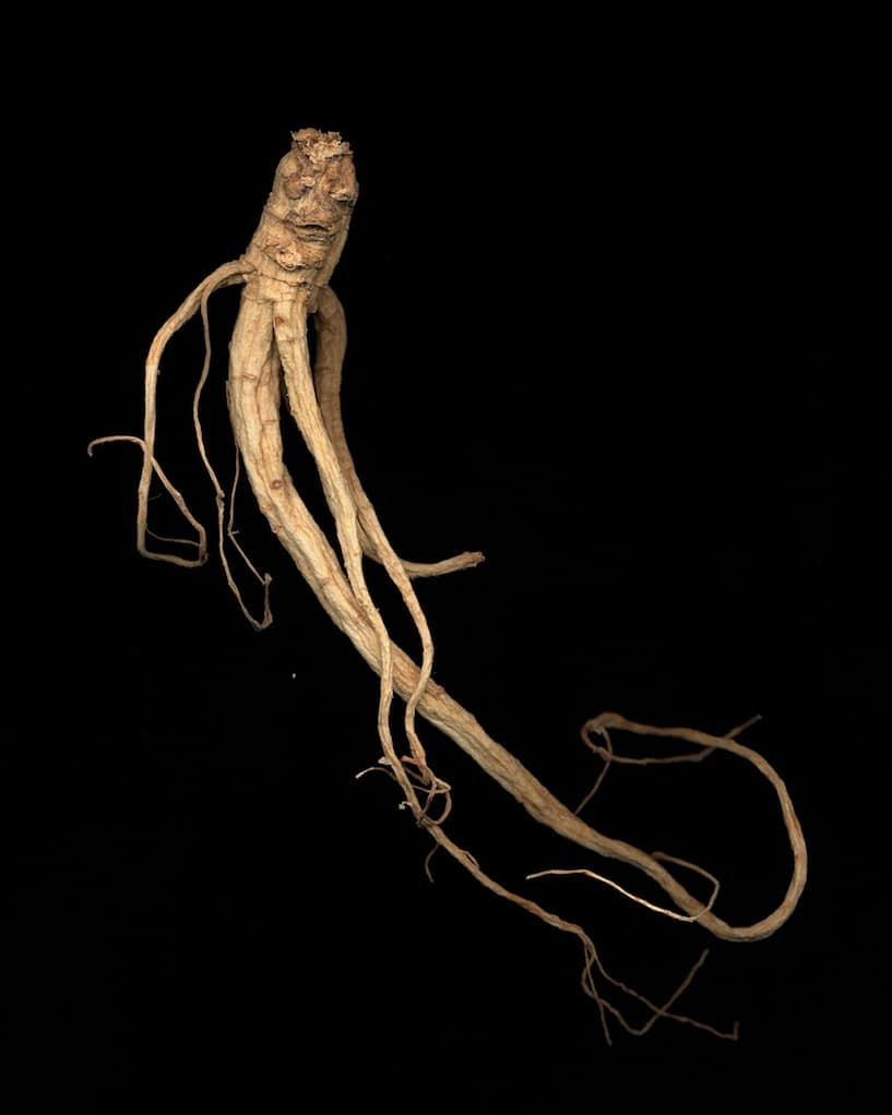 From Ginseng Root Studies, 2005