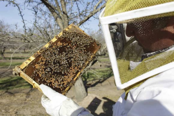 Bee_Inspector.jpg