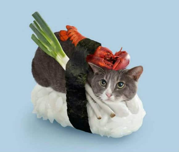 George Stroumboulopoulos Tonight | Sushi Cats: A New Fun ...