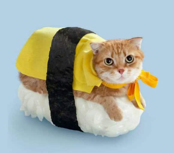 Japanese_Sushi_Cat2.jpg