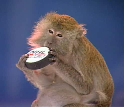 Maggie the Monkey