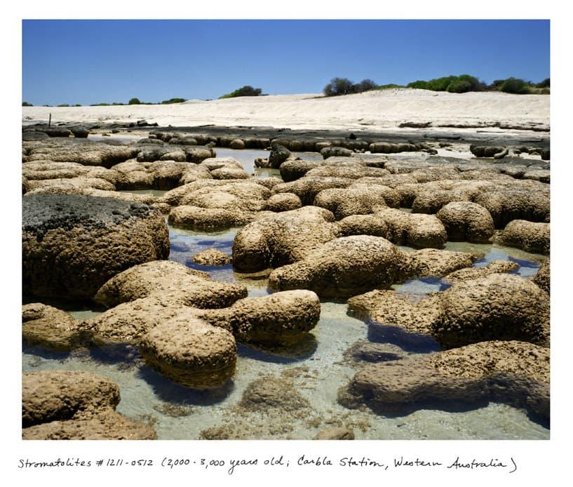 Stromatolites #1211-0512 (2,000 - 3,000 years old; Carbla Station, Western Australia)