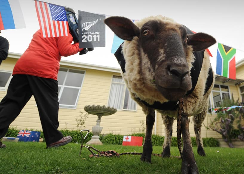 Sonny Wool the Lamb