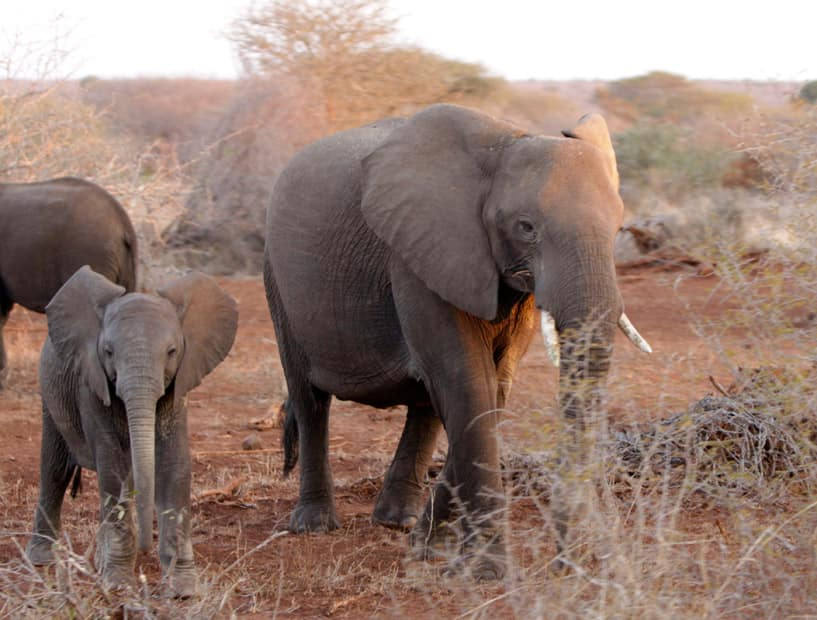 elephant poaching what can we do