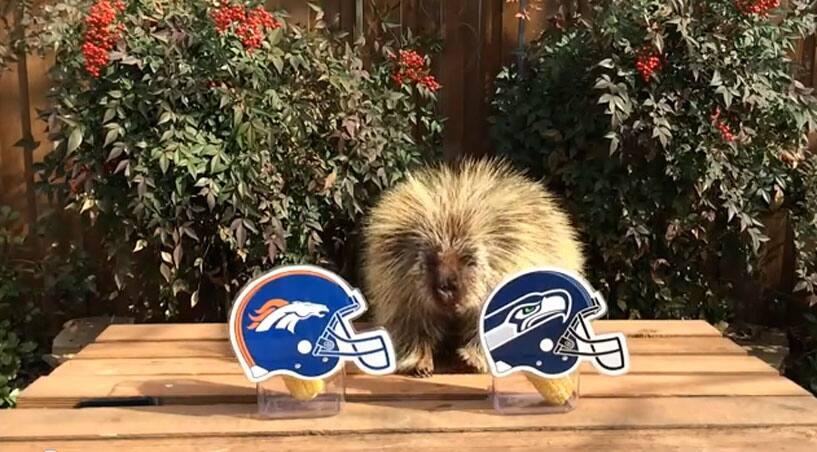 Teddy Bear the Porcupine
