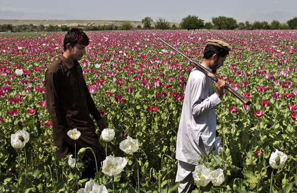 afghan-feature.jpg