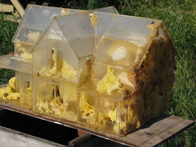 The Plexiglass House