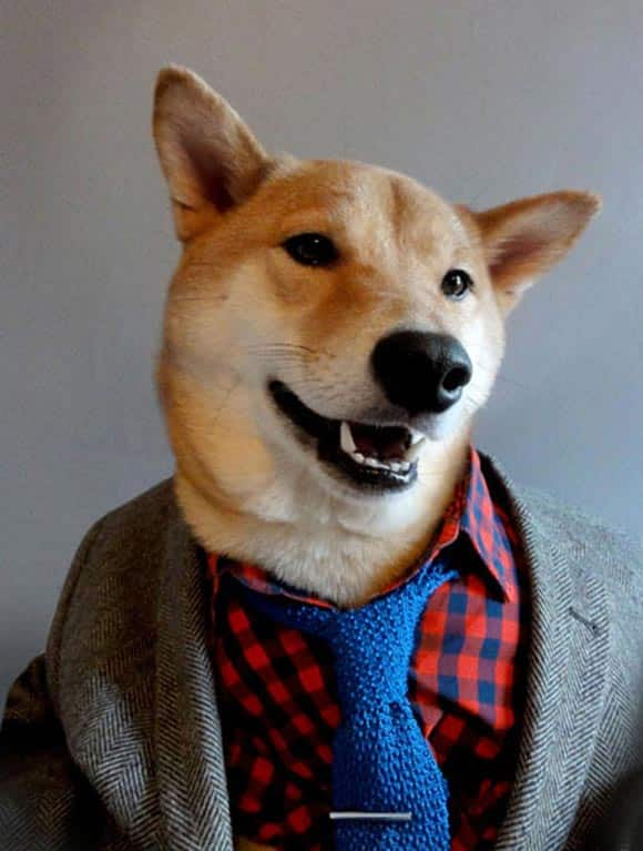 america's-next-top-model-how-a-cute-sharp-dressed-dog-is-becoming-something-of-a-fashion-star-feature1.jpg