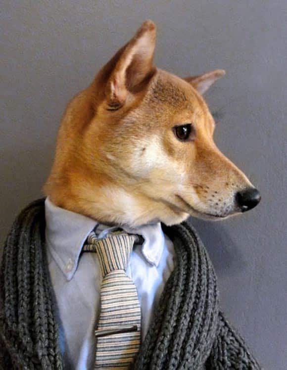 america's-next-top-model-how-a-cute-sharp-dressed-dog-is-becoming-something-of-a-fashion-star-feature2.jpg