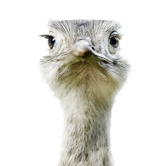 animal-portraits-ostrich.jpg