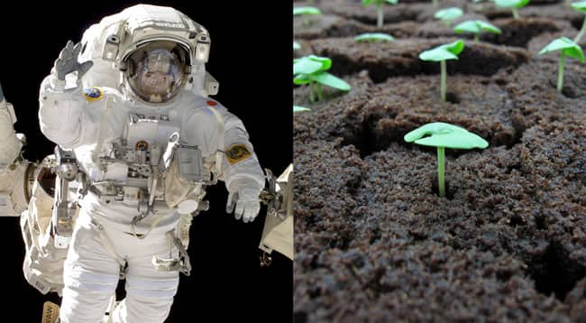 astronauts-growing-food-feature.jpg