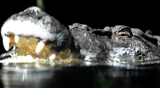 australia-crocodile.jpg