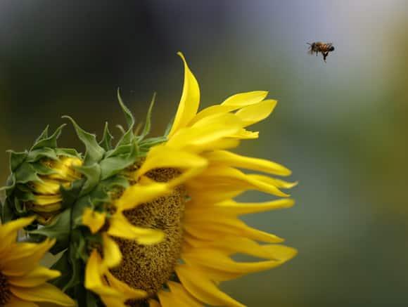 bee-story-flower.jpg