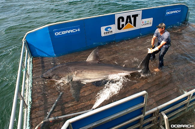 betsy-shark.jpg